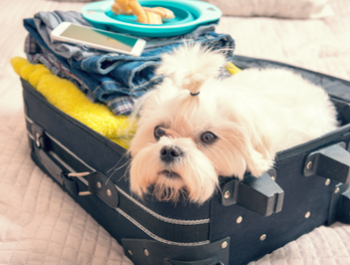 Дали вашето милениче патува со вас?